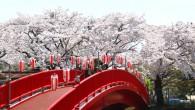 25桜まつり